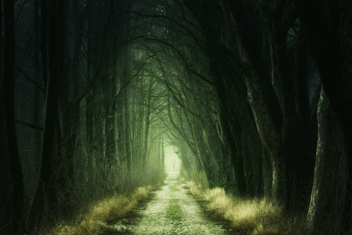 tree tunnel at daytime